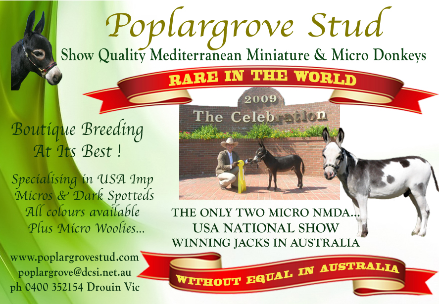 Horse_Deals_miniature_and_micro_donkey_advert_Poplargrove_Stud