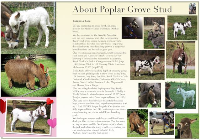 Poplargrove_Stud_photo_Of_the_donkeys_we_have_here_foals_woolies_micros_national_show_champions